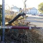 resti albero